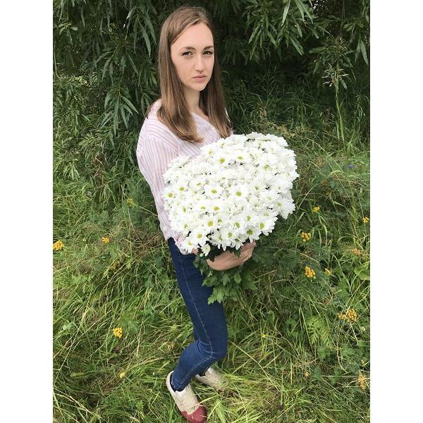 Букет №22 из кустовой  хризантемы